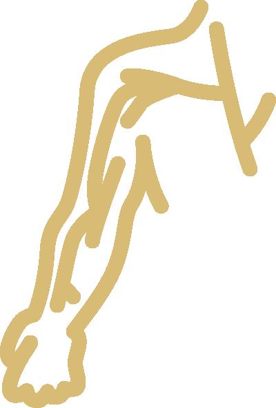 Dialysis access icon.